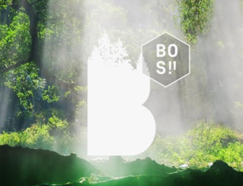 Bos! Festival | cinema promo